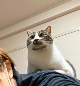 ボノ紹介 背中乗り猫